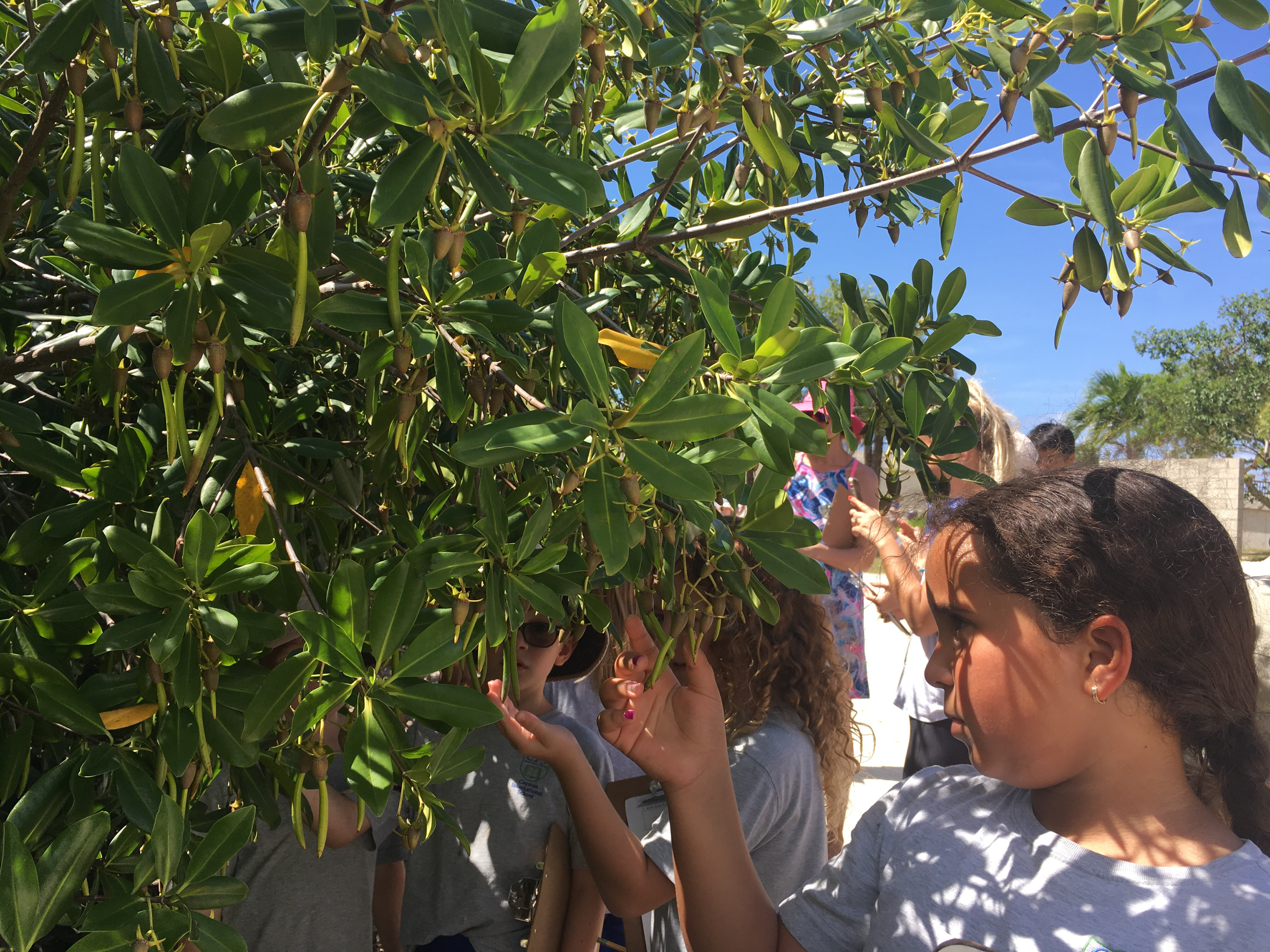 Students on the mangrove walk.